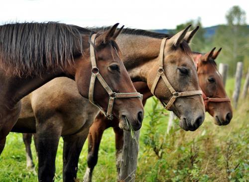 horses-2778167